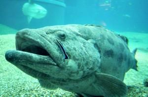 vocabulaire nom poissons anglais